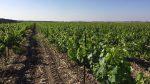 自然派志向のティシュビが造るヴィーガンワイン...オーガニックとの違いは?